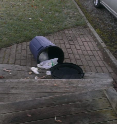 Five ways to keep raccoons out of a garbage can - Thumb and